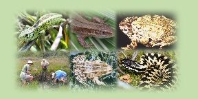Composite herp and herp workers pic